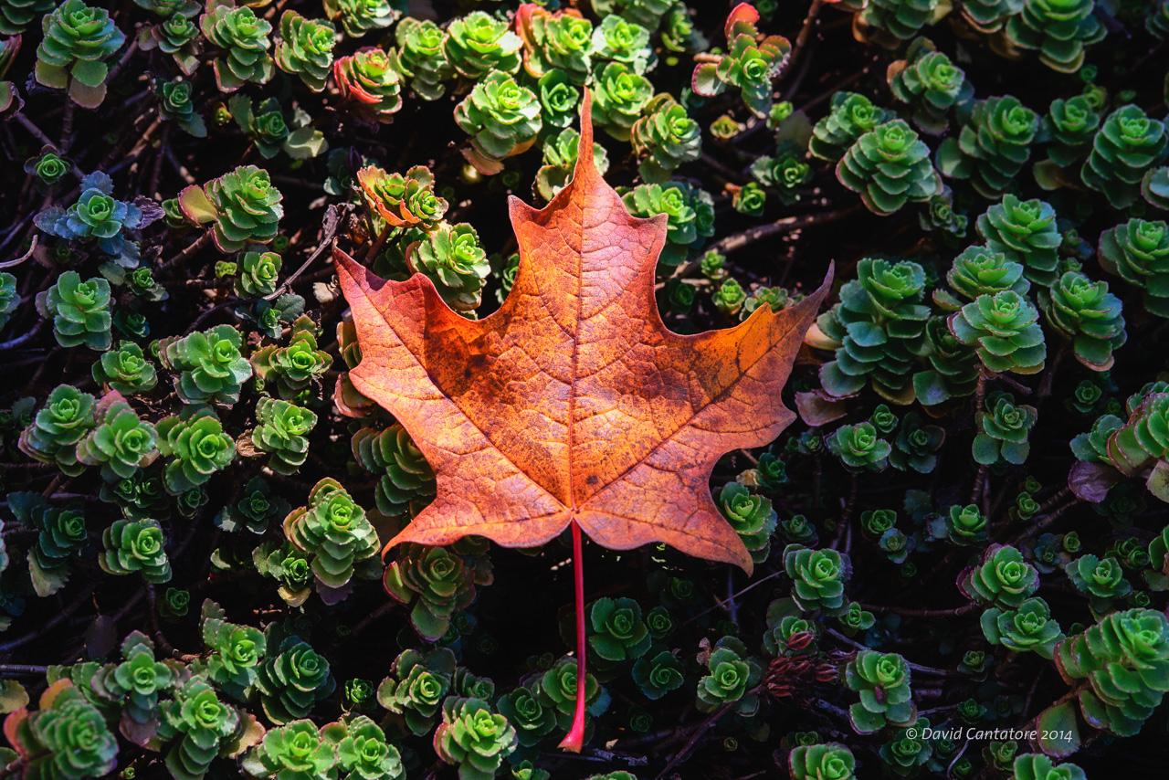 Fall's Flag